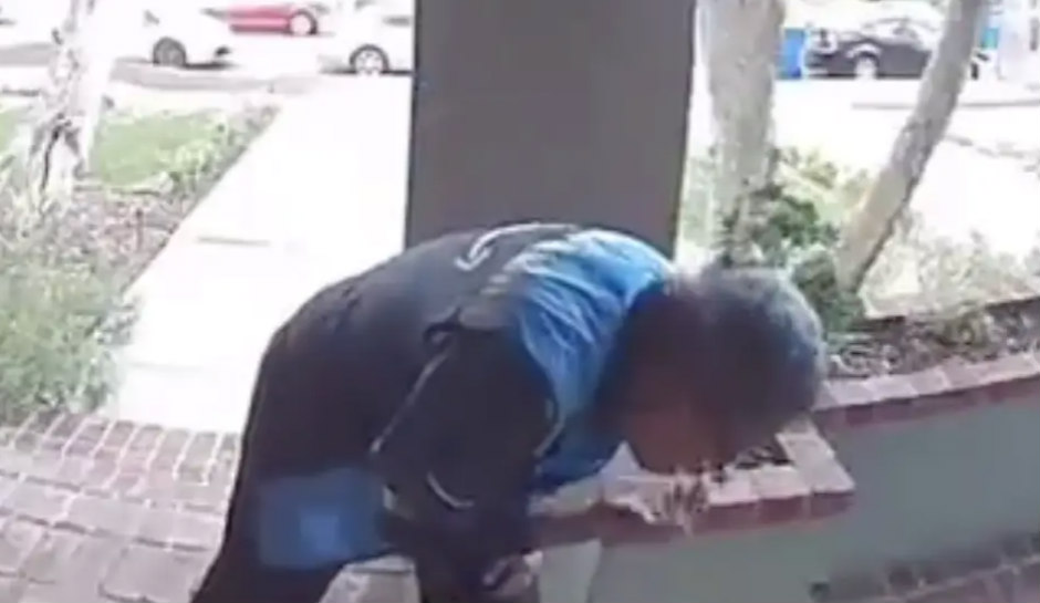 Watch: Amazon delivery driver caught SPITTING ON PACKAGE, leaves ...