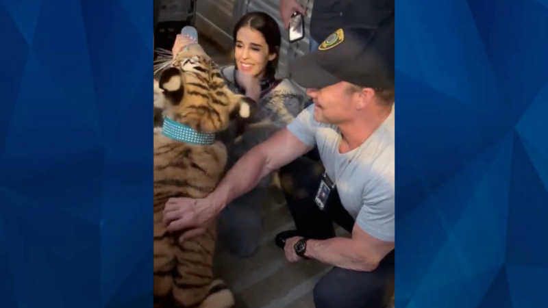 India the tiger